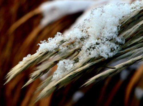 ,,śnieżek,,