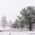 Zimowy mglisty poranek #zima #mgła #szron #Chojnice #mgliste