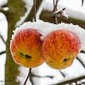 Zimowe jabłka #zima #jabłka