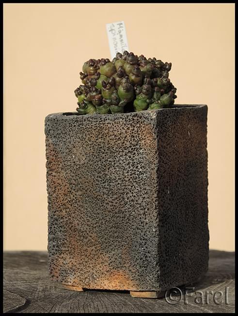 Zobacz Wątek Doniczki Ceramiczne Zalety I Wady