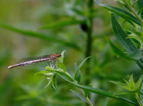 Ważka #natura #owad #przyroda #wazka #ważka