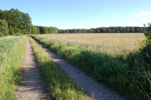 Droga przez leśną łąkę.