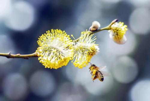 wiosna z pszczółką c.d.:)