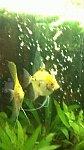 images76.fotosik.pl/486/ca5bbca550e2944am.jpg