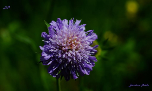 Fioletowy kwiat w rozmyciu